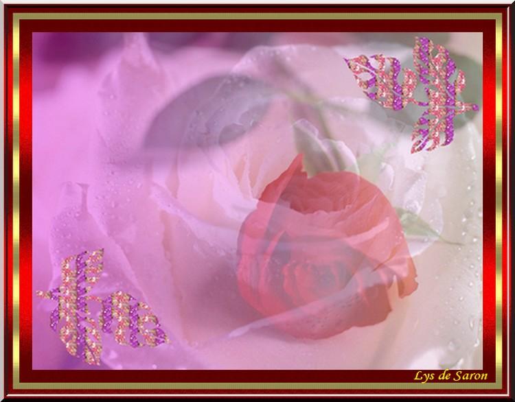 fleursblancheelys