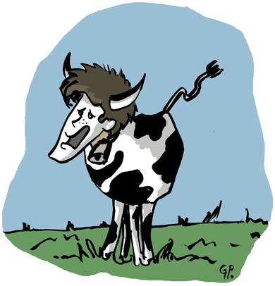 la vache, cette bête à manger du foin ...