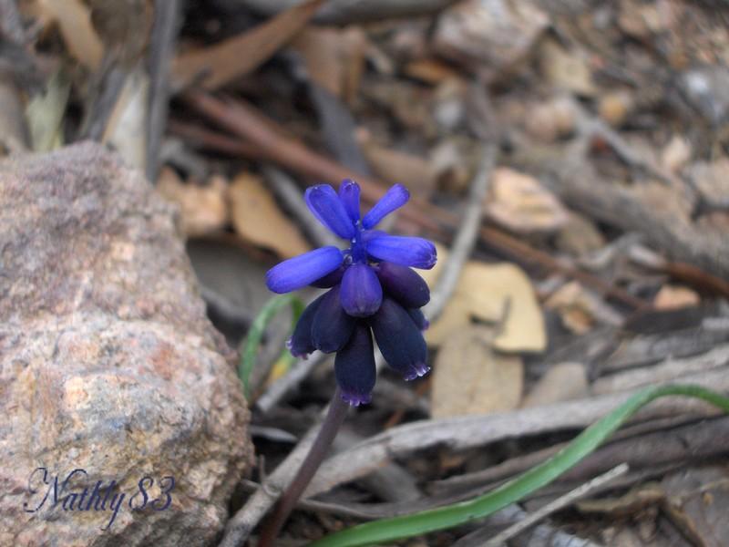 bleu garrigues de février