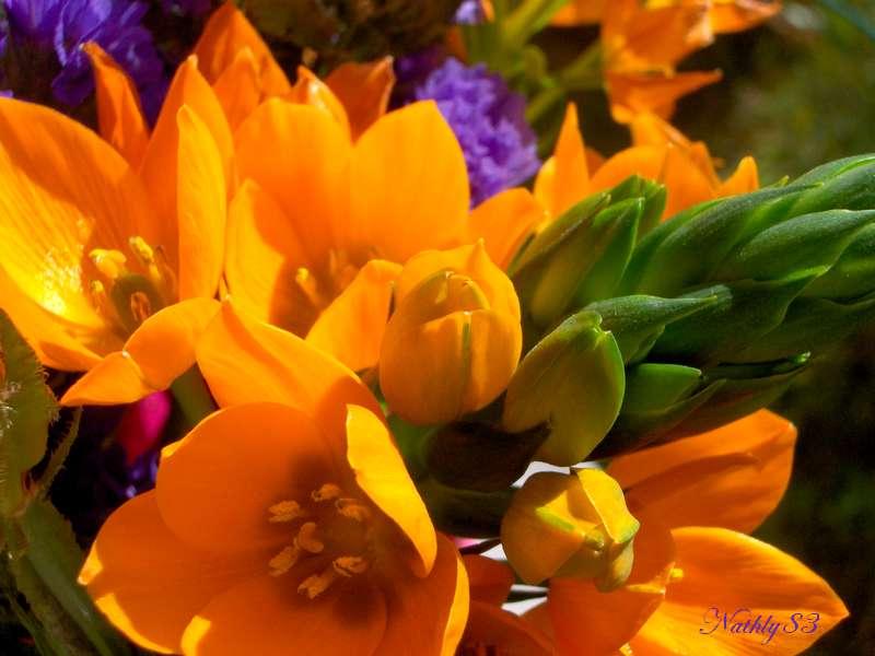 Vitamine... dans Passion Fleurie 0703140738424291388670