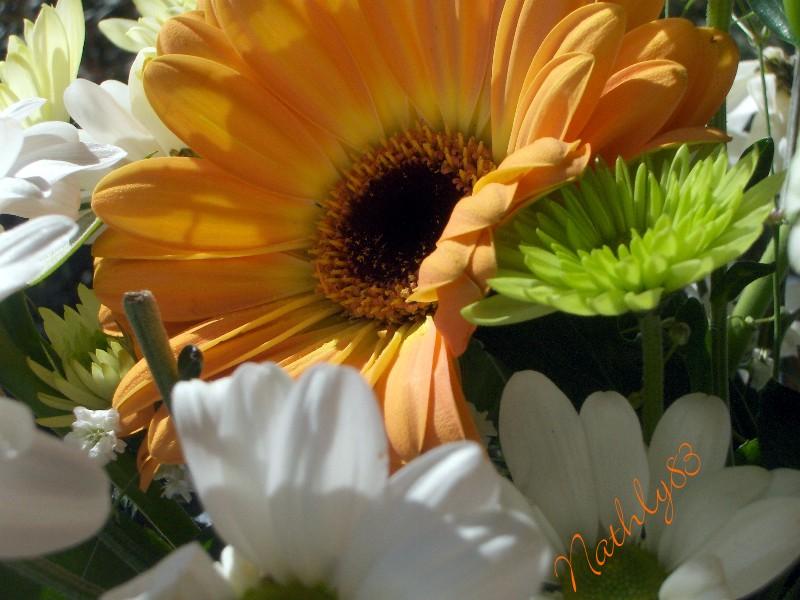 Marguerite... dans Passion Fleurie 0703181134244291398803