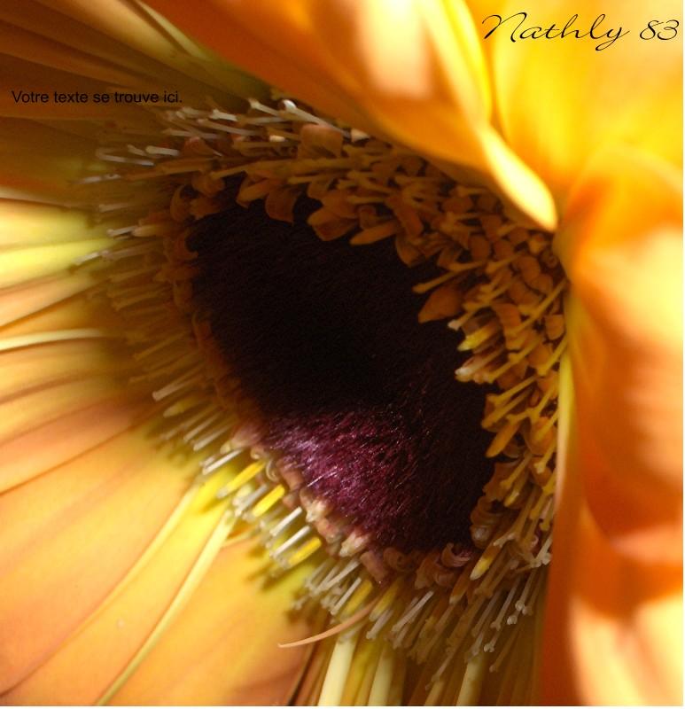Entre ombre et lumière... dans Passion Fleurie 0703181146534291398831