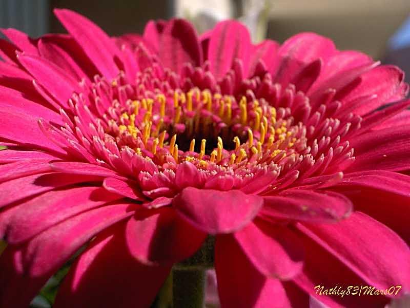 Discours de fleurs... dans Passion Fleurie 0703190906344291401398