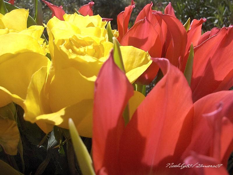 C'est le printemps... dans Au jour le jour 0703211044004291407022