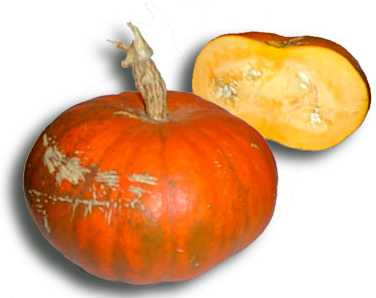 Le potiron est un légume tellement gros que si un bébé tente de le porter, il se fait écraser !