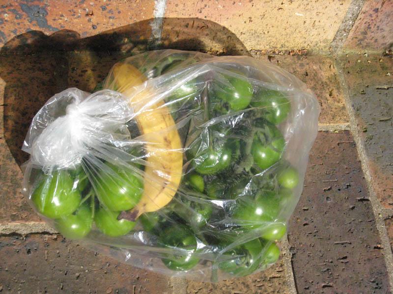 Mes tomates 2007 - suivi de culture 0707041103069673808171