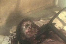 Zombi 3 / Zombie 3 (1988, Lucio Fulci, Claudio Fragasso & Bruno Mattei) 070710040149835709