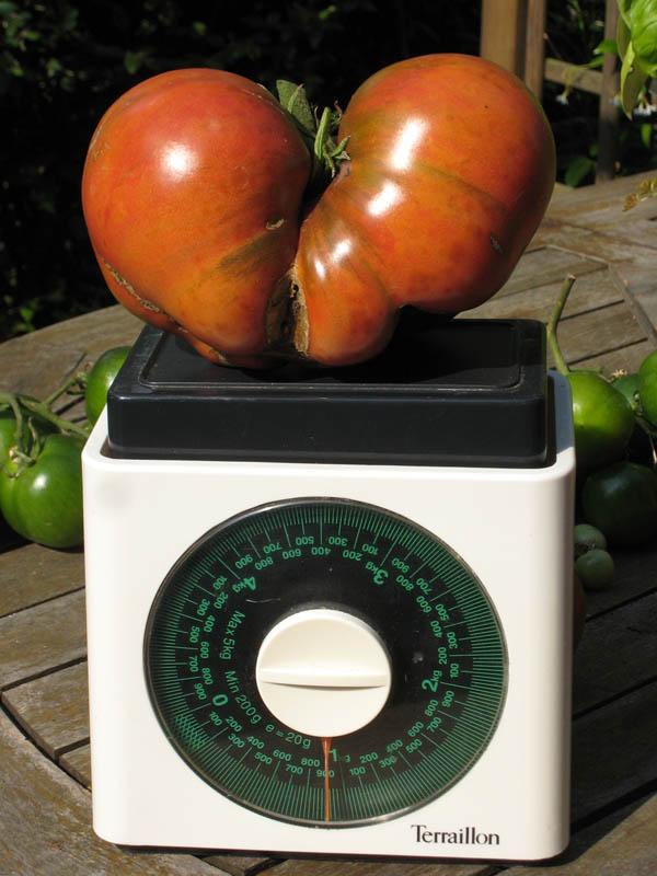 Mes tomates 2007 - suivi de culture 0707140349569673855415
