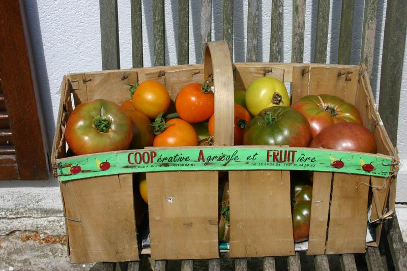 Mes tomates 2007 - suivi de culture 0707311225229673934547