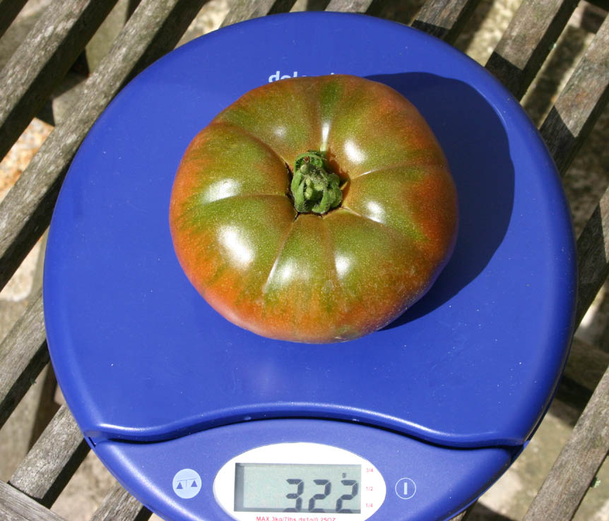 Mes tomates 2007 - suivi de culture 0707311227029673934554