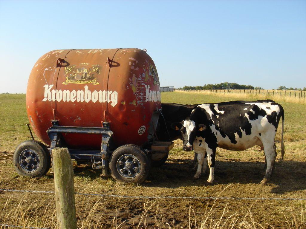 elle lui leche l anus la vache la vache quelle pute cette vache