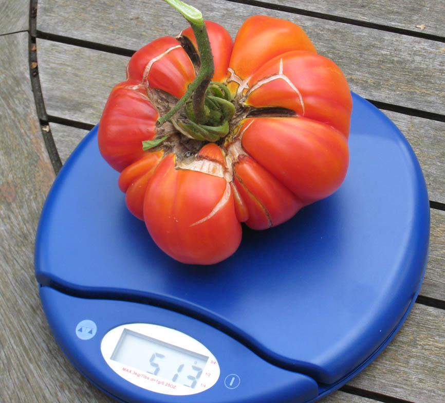 Mes tomates 2007 - suivi de culture 07091709104896731248430