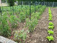 Mes tomates 2007 - suivi de culture Mini_0706091011203950679253