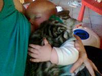 propreté d'un bébé chat Mini_0710060451571351297