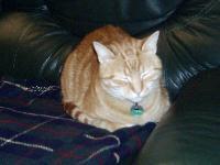 Présentation de votre chat...(Loulou) Mini_06041203535423601