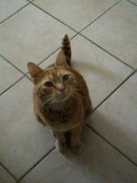 présentation des chats...souvenirs d'enfance..loulou(suite) Mini_06053004595943273