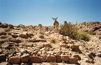 photos mon voyage en Jordanie, Petra, aman ETC......... Mini_0703261020352281423947